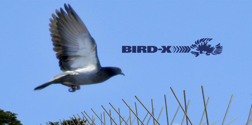 Bird-X Makes Benchmark the Middle East's Largest Humane ...